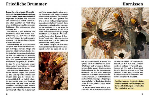 Phänomene der Natur - Hornissen